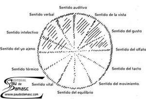 los-doce-sentidos-del-ser-humano-auditivo-vista-gusto-olfato-tacto-movimiento-equilibrio-vital-termico-yo-ajeno-intelectivo-verbal